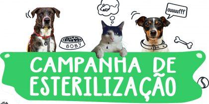 Campanha de Esterilização – Cães e Gatos